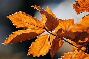 Autumn leaves sceenario.